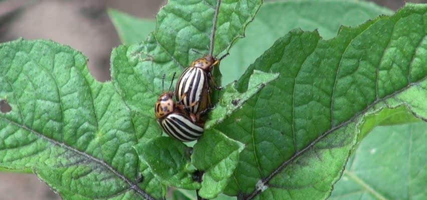 Common Garden Pests: As Heard on the Garden Spot