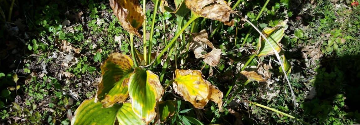 Winter Preparations – When to Cut Back Perennials
