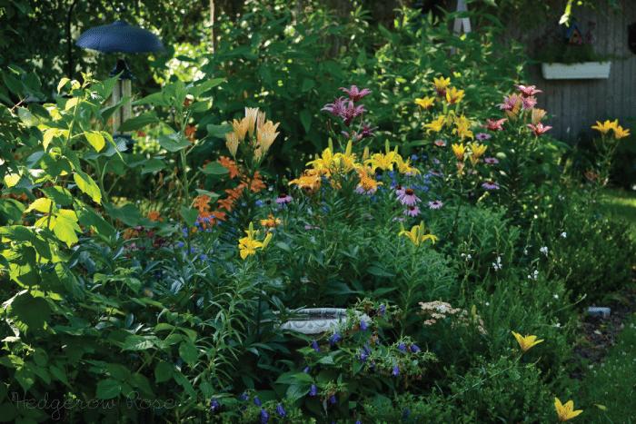 Lilies For The Garden Longfellow S Garden Center
